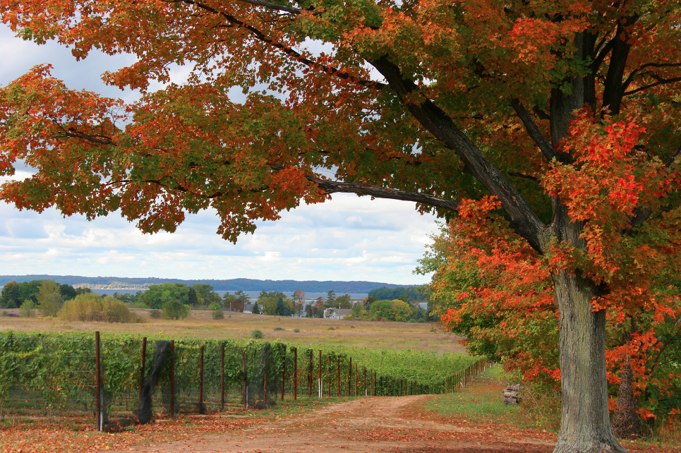 Try These Pure Michigan Wine Pairings For Your Thanksgiving Meal