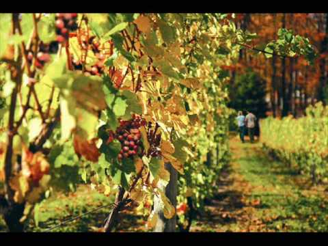 Michigan Wineries & Wine Trails | PureMichigan - YouTube